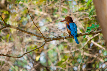 Indian Bird Sitting On A Tree Branch Stock Photo