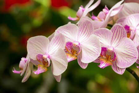 utopia: Close up shot of beautiful orchid flower
