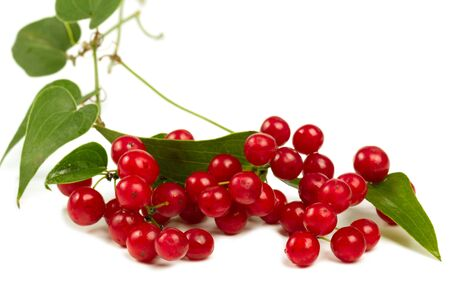 Red berries  isolated on white closeup shot photo