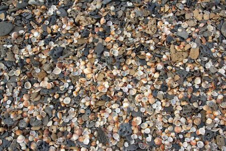 Shells And Pebbles On A Beach background