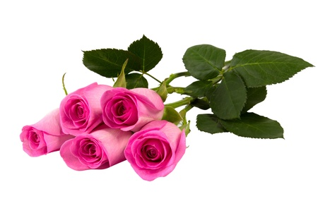 Five pink roses isolated on white background closeup shot