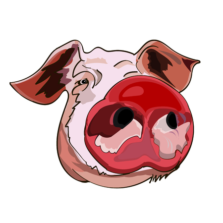 The image of the head of a pig, the symbol of the Chinese New Year, on an isolated background. Vector illustration