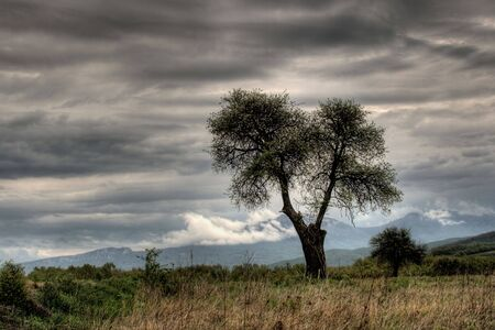 stock vista: A near perfect tree in the middle of a field Stock Photo