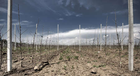 View on rows of apple trees in orchard Stock Photo - 8665605