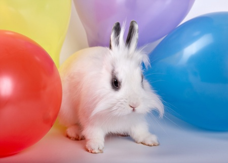 Baby white rabbit and colorful balloons, Cute Rabbit photo
