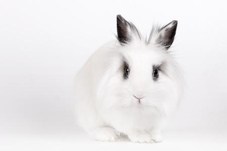 munch: Little white rabbit, a lions head, closeup