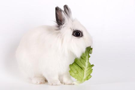 munch: White rabbit, a lion