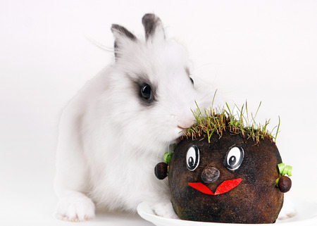 A baby white rabbit eating carrot, include clipping path photo