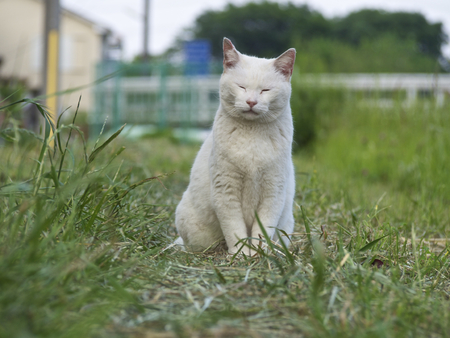 land mammals: The white cat which there is outdoors