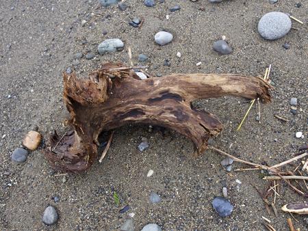 driftwood: Driftwood