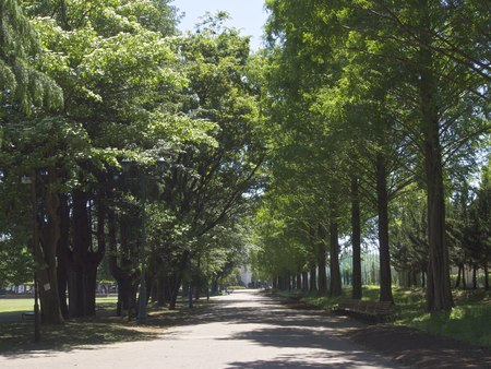 Boardwalk surrounded by trees