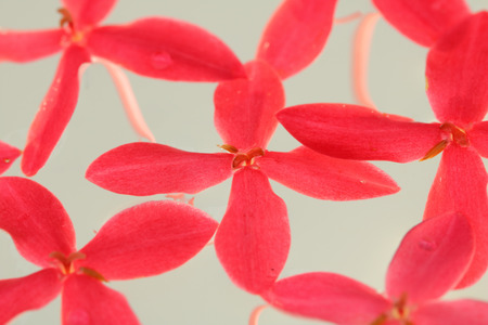 Pink needle flowers have a white background.