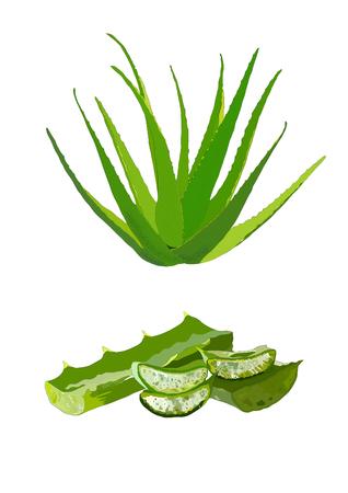 Aloe vera vector