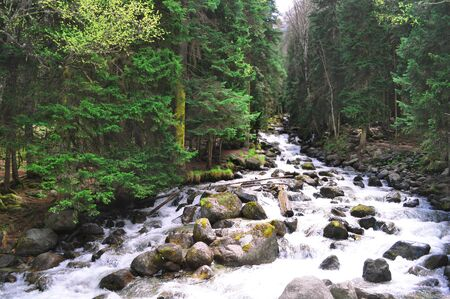 Stormy mountain river with rocks on the shore, which flows through the dense forest