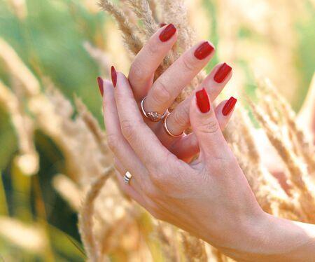 Trockenes Gras an einem hellen sonnigen Tag in den Händen einer jungen Frau mit roten Nägeln
