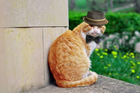 Portrait of a beautiful funny cat in a hat and with a butterfly that smiles