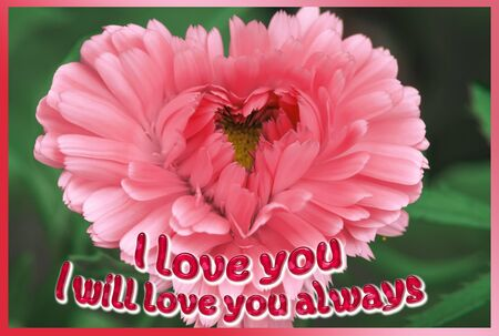 Pink heart-shaped flower on a black background with the words  I will love you always