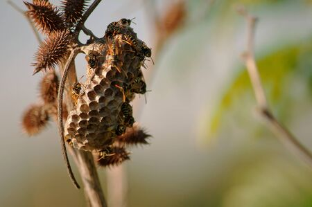 A paper hornet's nest was built by wild wasps in the summer Stock Photo