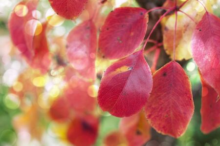 Colorful autumn leaves grow on a tree outdoors on an autumn cloudy day