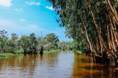 Beautiful tropical cajuput forest of Tra Su, the forest with cajuput trees, flooded plants, water, blue sky. Tra Su is a popular tourist destination in An Giang, Mekong delta. Landscape photography.