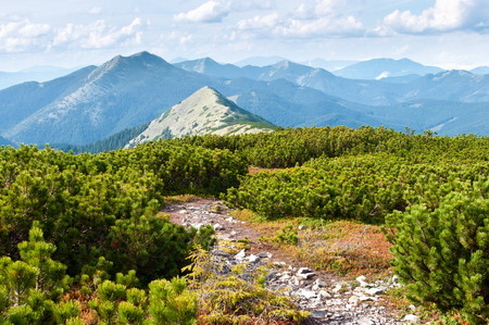 Carpathian mountains in autumn. A path to the peak waiving through creeping pine. Cloudy sunny day Stock Photo