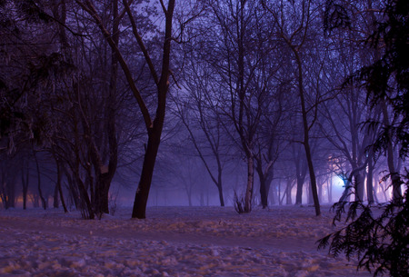 Foggy winter night in the park. Majestic silhouettes of trees covered in purple mist. A downtrodden path goes across the mysterious and picturesque park