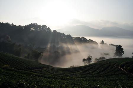 Sunshine on the tea plot 免版税图像