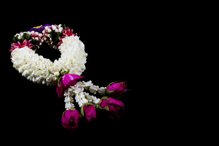 The jasmine garland from thailand on the black background  Stock Photo