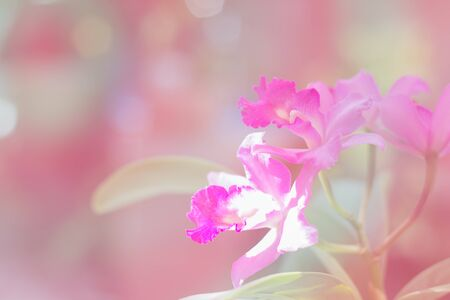 thai orchid: Colorful orchid with color filter in pink tone.