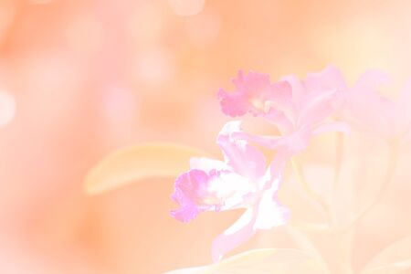 colorize: Colorful orchid with color filter in orange tone. Stock Photo