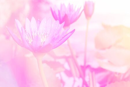 thai orchid: Color full abstract lotus flower with pink color filter