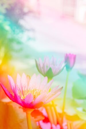 colorize: Abstract lotus flower with color filter. Stock Photo
