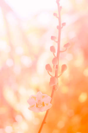 thai orchid: Colorful flower with bokeh made by color filter,vintage style. Stock Photo