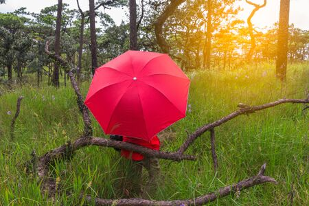 umbella: Woman with red umbella in nature on background ,lifestyle fashion trendy style concept and happyness concept with nature.Phusoidao national park Thailand.