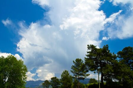 leeway: A large cloud in a blue sky on the background of pine