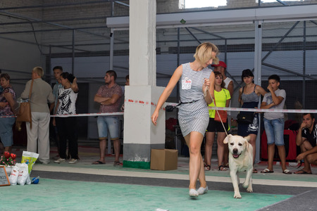show ring: VOLGOGRAD - AUGUST 28: Canine along with trust Labrador doing a jog around the ring at a dog show. August 28, 2016 in Volgograd, Russia. Editorial