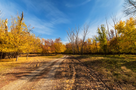 A dirt road runs through the autumn forest. All strewn with yellow fallen leaves. Standard-Bild - 113035515