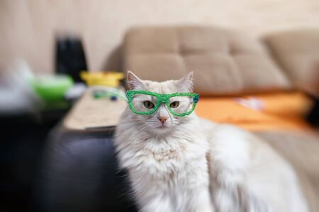 Domestic cat of red and white color tries on glasses drawn with a 3D pen