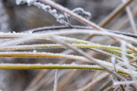 Withered and green grass is covered with frost after the onset of frost Stok Fotoğraf