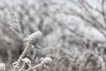 frozen and covered with ice large wildflowers in a meadow Stok Fotoğraf