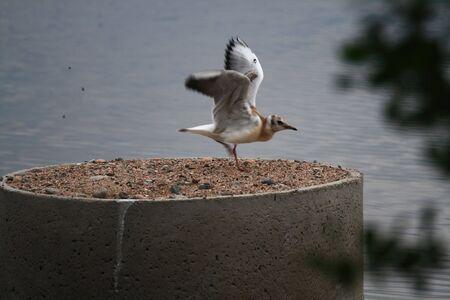Seagull Launching Reklamní fotografie - 2624356