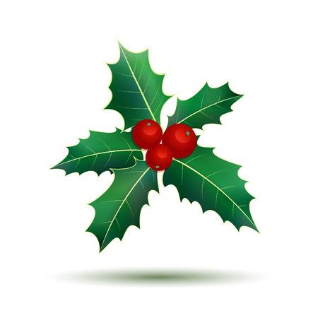 aquifolium: Holly. Christmas holly berries on white. Vector illustration
