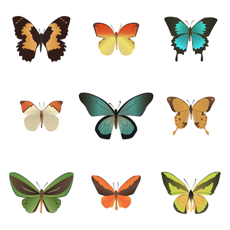 white bacground: Set of colorful tropical butterfly  isolated on white bacground.