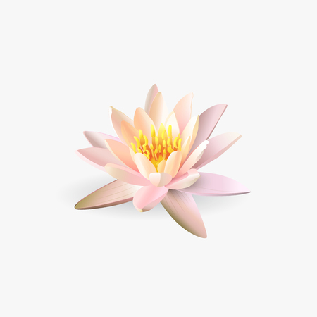 padma: Lotus flower isolated on white background. Vector illustration