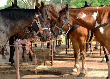 sun lit: A group of horses standing in a sun lit corral facing each other tied to a rail with different color rope  Stock Photo