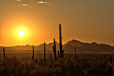 sonoran: Sunset rays over sonoran landscape silhouetting a family of cactus, mountains and scrubland.