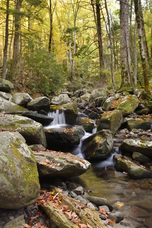 smokies: Fall leaves are scatterd on bolders and logs in a small stream surrounded by trees with fall foliage in the Great Smoky Mountain National Park.