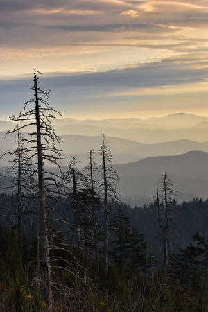 ariel: Ariel view of sunrise showing the blue hues of the Great Smokies silhouetted with pine trees.