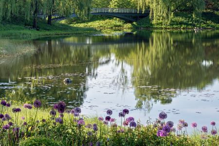 Beautiful Chicago Botanical Gardens with purple flowers in the foreground, with bridge and trees relecting in the lake during morning light.