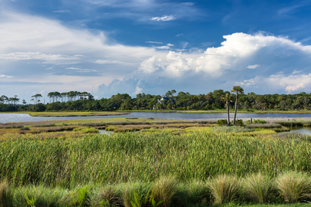 The spectacular Barrier Island of Kiawah showing water inlets, marshes, forests, coupled with a beautiful blue sky and puffy clouds in early evening.